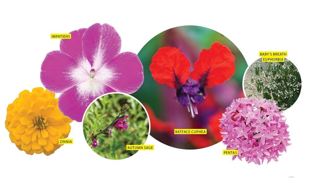 Battle Of The Flower Garden San Antonio Magazine